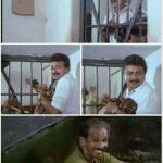 Jayaram Jailil ninu thurannu vidan parayunna Meme